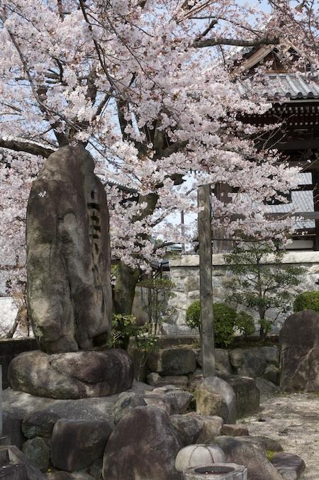 Sakura in Seto