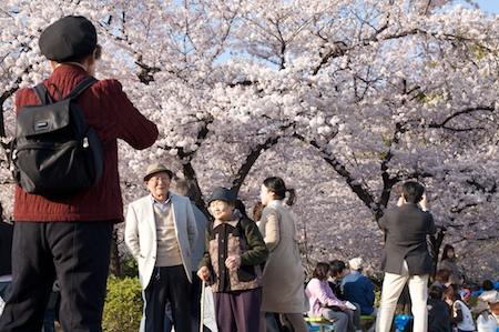 Hanami in Tsurumai Park, Nagoya