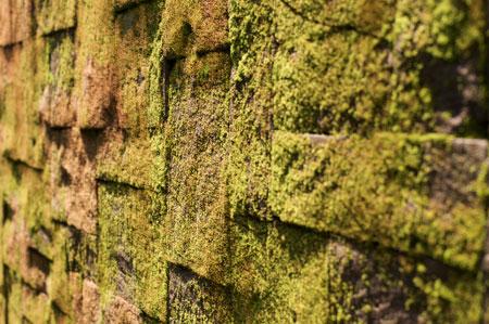 Moss on a wall