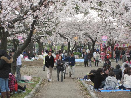 Sakura 2010 - Tsurama Park
